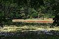 Плаваючий острів утворений свагновими мохами.jpg