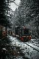 Поїзд в заповіднику Ґорґани.jpg