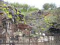 Скелі Мопра 27.jpg