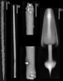 Спикулы (скелетные элементы) Iophon piceum (Porifera).png