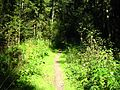 Тропа в парке Зверинец - panoramio.jpg