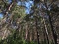 Уктусский лесной парк.jpg