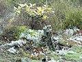 Фото путешествия по Беларуси 721.jpg