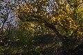 پاییزدر ایران-قاهان قم-Autumn in iran-qom 33.jpg