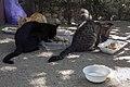 گربه -تهران-cat in iran 05.jpg