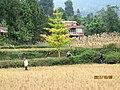 万源-庙垭-尖山村-明年这里就会是所小学校 - panoramio.jpg
