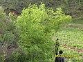 五月的深沟里 - panoramio.jpg