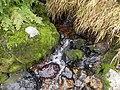 北海岳の湧水2011 - panoramio.jpg
