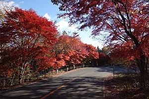 日塩もみじライン カーブ24 20151105 - panoramio.jpg