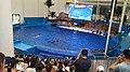 福建长泰天柱山欢乐大世界 海豚剧场-海豚表演 06.jpg