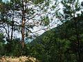 紫金南岭镇20121001 - panoramio (2).jpg