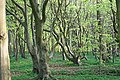 ... den Wald vor lauter Bäumen.jpg