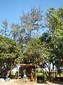 06017jfBahay Puso Virgen Milagrosa Rosario Seminary Balanga City Bataanfvf 19.JPG