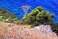 07026 Olbia, Province of Olbia-Tempio, Italy - panoramio (2).jpg