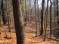 100 Acre Wood, Malta NY.jpg