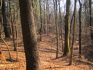 Luther Forest Technology Campus - 100 Acre Wood in late Autumn