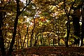 131103 Hokkaido University Botanical Gardens Sapporo Hokkaido Japan10bs.jpg