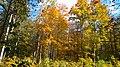 14 Брянский лес Номинация Природа Котова Мариша.jpg