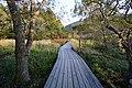 191102 Hakone Botanical Garden of Wetlands Hakone Japan08.JPG
