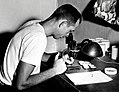 1955. Binocular microscope used to identify larvaevorid puparia from spruce budworm rearing. W.K. Coulter at microscope. Field lab. Union, Oregon. (33422970556).jpg