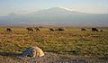1993 141-9A Amboseli Mount Kilimanjaro.jpg