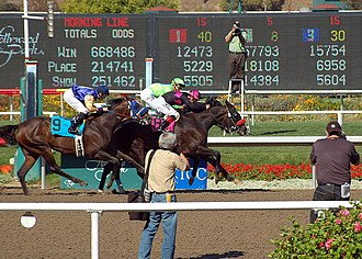 Lava Man - Lava Man (with jockey Corey Nakatani) after dueling with A.P. Xcellent to win the 2007 Hollywood Gold Cup.