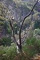 2012-10-27 12-31-35 Pentax JH (49283932207).jpg