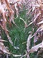 2013-10-24 raygrass 2 de 2.jpg