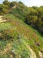 2017-03-18 Spring flowers on the cliffs above Praia dos Alemães, Albufeira.JPG