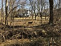 2018-02-05 12 53 44 A deer on a sunny winter day on the edge of a wooded area within the Franklin Farm section of Oak Hill, Fairfax County, Virginia.jpg