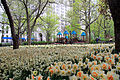 3142-Madison Square Park.JPG