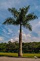 A Palmeira e o Pato.jpg