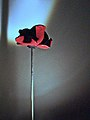 A Poppy for Albert (15684970779).jpg