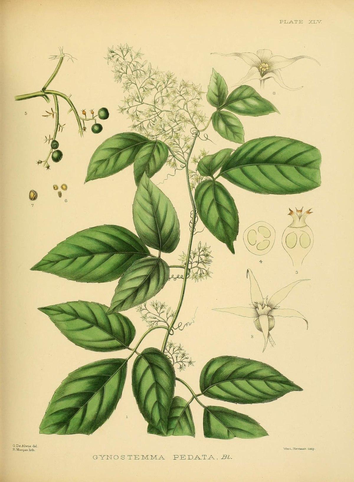 A hand-book to the flora of Ceylon (Plate XLV) (6430647805).jpg