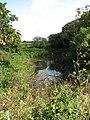 A hidden pond - geograph.org.uk - 550666.jpg
