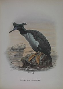 A history of the birds of New Zealand (7157827038).jpg