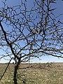 A scraggly tree at Rock Creek Crossing in Council Grove, KS (8c9da8c4707140fea89ad4923d6b1756).JPG