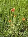 Ab plant 1424.jpg