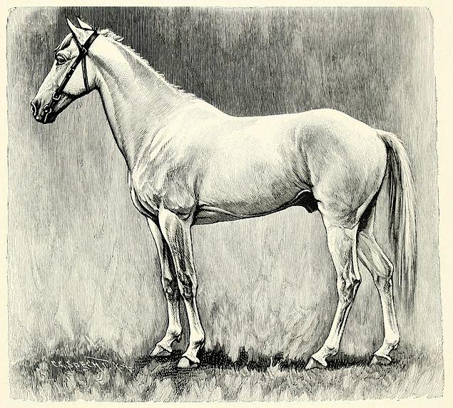 Horse - Philippa Jane Keyworth - Regency Romance Author