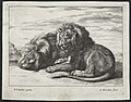 Abraham Blooteling - Various Lions - 2005.266.2 - Cleveland Museum of Art.jpg