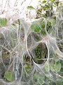 Abstract art in the hedgerow - geograph.org.uk - 178953.jpg