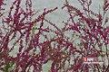 Adelabad dam 2020-04-25 03.jpg