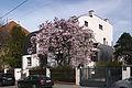 Adolf Loos Haus Steiner mit Magnolie.jpg