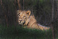 Africa Safari 009 (5276229383).jpg