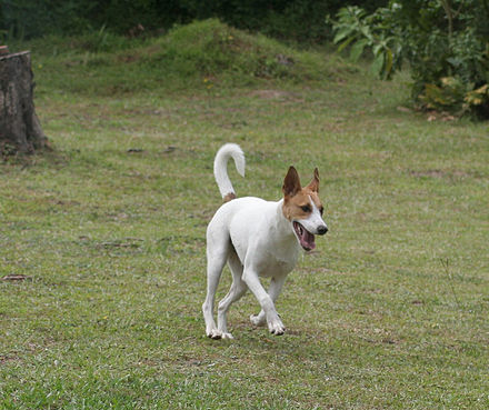 Dog Behaviour One Day Course New Forest