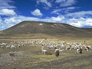 Santa Lucía District, Lampa District in Puno, Peru