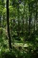Alsfeld Eifa LPA 378405 Auenverbund Schwalm Swamp.png