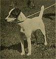 Amateur's dog book; (1906) (18111210301).jpg
