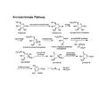 Aminoshikimate pathway-1.png