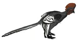 Anchiornis martyniuk.png
